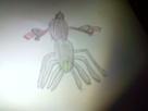 [Fan Art] de SoundWipe 1401534168-airachnid-1