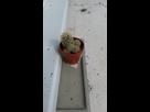 mon petit cactus 1404406114-20140703-180030