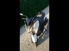 Xmax 400 ABS blanc  1406836940-dsc-0205