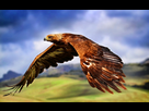 Mes petits dessins 1407510551-aigle-royal