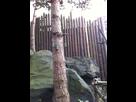 Boitiers dans les arbres ?  1421534180-img-5305