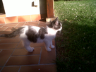 Minouche mon chat 1421845740-img00218-20120731-1949