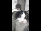 Minouche mon chat 1421845813-img-20150120-173235