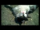 Minouche mon chat 1421845896-img-00000007-edit