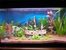 [Help] Achat poissons pour aquarium eau chaude 130 litres  1430747087-20150503-192612-richtone-hdr