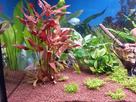 [Help] Achat poissons pour aquarium eau chaude 130 litres  1430747098-20150503-192629-richtone-hdr