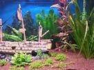 [Help] Achat poissons pour aquarium eau chaude 130 litres  1430747109-20150503-192638-richtone-hdr