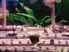 [Help] Achat poissons pour aquarium eau chaude 130 litres  1430751838-20150504-165633