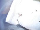 Elevage de Carausius morosus 1434271659-bebe-phasme-2