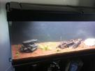 Projet et démarrage aquarium 350L - Page 3 1435160966-img-3524