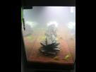 Projet et démarrage aquarium 350L - Page 3 1435230279-img-3522