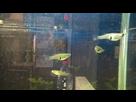 Quels sont ces poissons sauvages ? (résolu) 1435232750-02