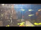 Quels sont ces poissons sauvages ? (résolu) 1435232751-05