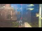 Quels sont ces poissons sauvages ? (résolu) 1435232753-03