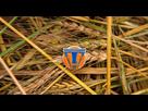 A la poursuite de Demain (Tomorrowland) - Page 2 1462458830-image