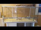 Nouveaux terrarium pour Rex un ans. 1471595859-20160819-092358