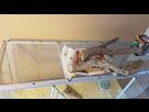 Nouveaux terrarium pour Rex un ans. 1471595887-20160819-092415