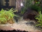 Questions suite à la mise en eau de l'aquarium 1478788072-img-20161109-083309