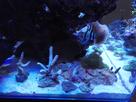 2nd Bac récifal de Max : 720 de Aquarium Systems 1482006586-img-20161217-212003
