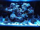 2nd Bac récifal de Max : 720 de Aquarium Systems 1482006587-img-20161217-211956