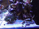 2nd Bac récifal de Max : 720 de Aquarium Systems 1482006589-img-20161217-212011