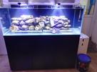 2nd Bac récifal de Max : 720 de Aquarium Systems 1482942739-img-20161228-173014-1