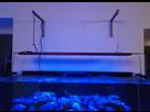 2nd Bac récifal de Max : 720 de Aquarium Systems 1483306376-img-20170101-222717