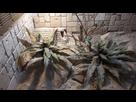 [Gekonia Chazaliae] Terrarium 1518189622-20180209-144351-resized