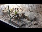 [Gekonia Chazaliae] Terrarium 1518189641-20180209-144358-resized