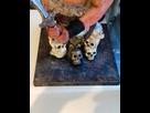 buste conan le destructeur 1/4 1518345971-img-20180211-112734-688