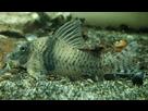 Ménagerie, plus de 3.000L d'aquariums - Page 18 1536918878-test-0001