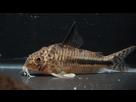 Ménagerie, plus de 3.000L d'aquariums - Page 18 1536918925-test-0008