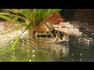 Ménagerie, plus de 3.000L d'aquariums - Page 18 1536918929-test-0007