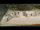 Ménagerie, plus de 3.000L d'aquariums - Page 18 1536919023-test-0017
