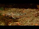 Ménagerie, plus de 3.000L d'aquariums - Page 18 1536919030-test-0015