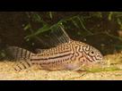 Ménagerie, plus de 3.000L d'aquariums - Page 18 1536919042-test-0019