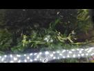 Quel est cette algue ? Merki 1539946273-img-20181019-123810