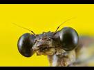 libellule en cours  1542576932-images