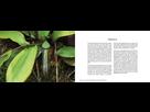 Livre sur la flore remarquable de Sumatra par Jeremy Holden. 1543000563-1
