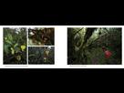 Livre sur la flore remarquable de Sumatra par Jeremy Holden. 1543000579-4
