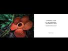 Livre sur la flore remarquable de Sumatra par Jeremy Holden. 1543000584-2