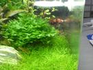 Nanocube 60L Dennerle - Shrimp home 1548356065-p1000021
