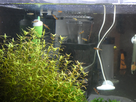Nanocube 60L Dennerle - Shrimp home 1548357073-p1000027