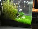 Nanocube 60L Dennerle - Shrimp home 1548357362-p1000029