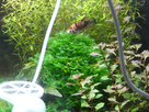 Nanocube 60L Dennerle - Shrimp home 1548358875-p1000037