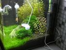 Nanocube 60L Dennerle - Shrimp home 1548359066-p1000034