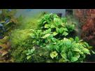 Problème algues filamenteuses.......  1550681566-20190205-101421