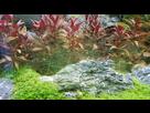 Problème algues filamenteuses.......  1550681966-20190205-101355