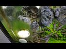 Problème algues filamenteuses.......  1550682297-20190205-101351