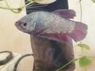 Un nouveau co locataire pour un aquariophile heureux 1557776182-img-20190513-190724